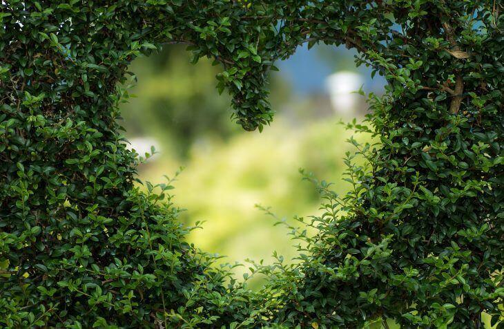 Isečeno srce u živoj ogradi
