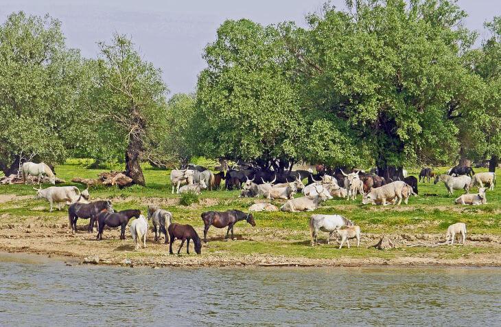 životinje na livadi pored reke